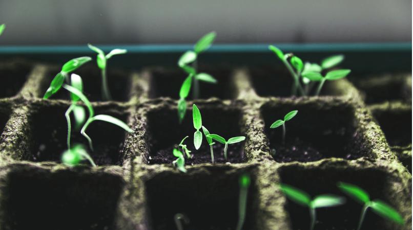 Lead Nurturing: Definition, Basics und Fehlervermeidung